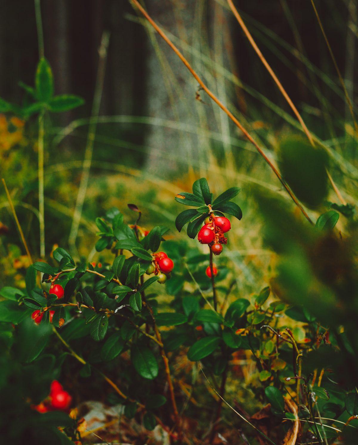 Luontoretkelle metsään – ruskan merkit ilmassa